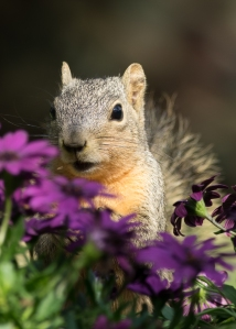 Squirrel and daisies